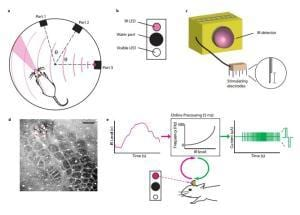 Brain prostheses create a sense of touch: Infrared signaling could create sense of touch in artificial limbs