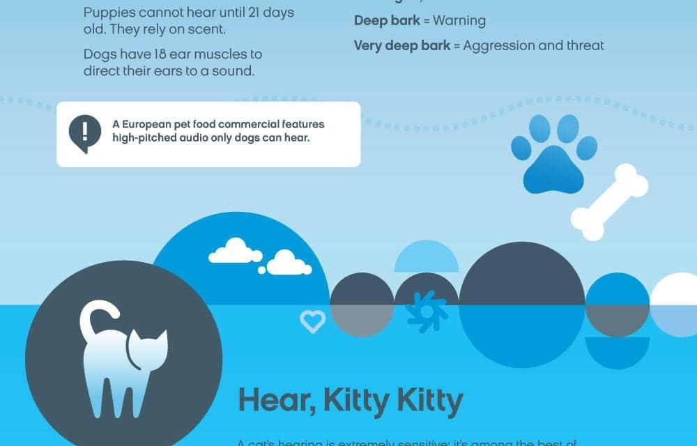 Sounds Your Pet Hears