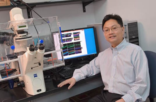 Notch Pathway Finding May Lead to Hearing Restoration