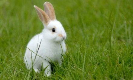 Like Rabbits, We Use Echoes to Perceive Distance