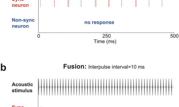 How Humans Hear Time within Sound