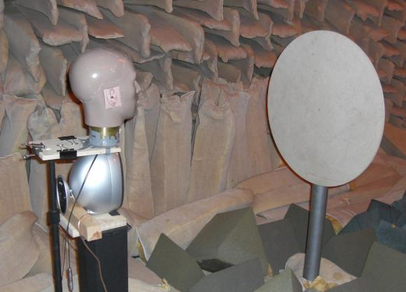 Scientists Find Echolocation Requires Keen Bilateral Hearing