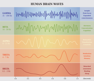 Human Brain Waves