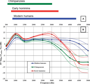 Model results showing auditory system of early humans, chimpanzees, modern humans.