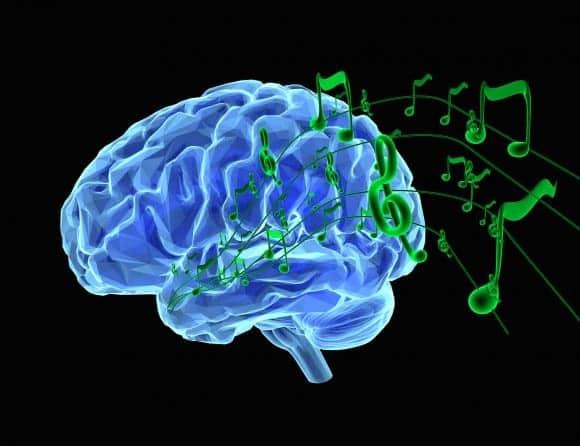 How Certain Sounds Shape the Brain