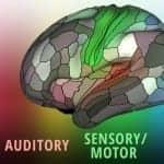 Brain Map Shows Landscape of Sensory Perception