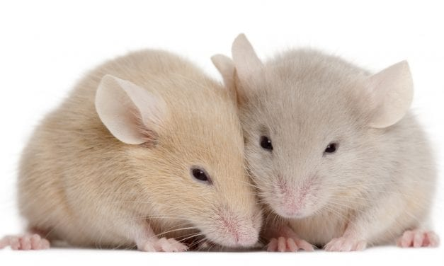 Researchers Develop 'Optimized' Gene-Editing System to Help Prevent Hearing Loss in Mice