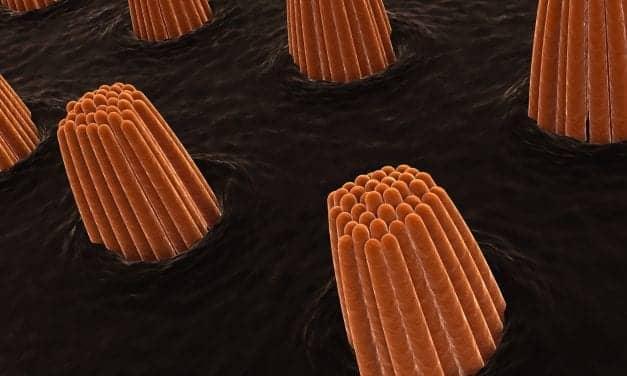 University of Colorado Researchers Challenge Sensory Cell Sound Detection