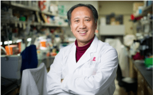 Jian Zuo, PhD, and his colleagues induced supporting cells located in the inner ear of adult mice to take on the appearance of immature hair cells and to begin producing some of the signature proteins of hair cells.