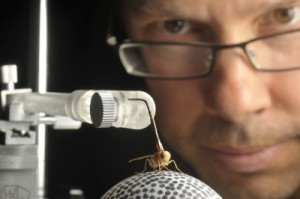 Professor Andrew Mason's new research explores Ormia ochracea, a small, yellow fly with an amazing sense of directional hearing that's second to none in the animal kingdom. University of Toronto Scarborough