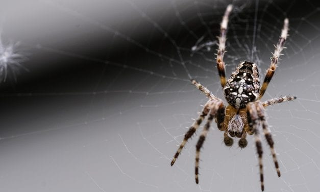 Researchers Study Sound Quality of Spider Silk