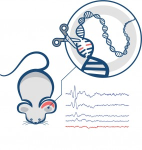 In a new Nature paper, a Rice University professor outlines a strategy that uses gene editing to slow the progression of a genetic hearing disease. Illustration by Xue (Sherry) Gao