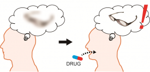 Researchers at the University of Tokyo led by Professor Yuji Ikegaya studied the effect of histamine on long-term memory. After taking a drug to boost levels of histamine in the brain, adults in their mid-20s had improved long-term memory test scores and mice temporarily had memories that lasted 25 days longer than normal.