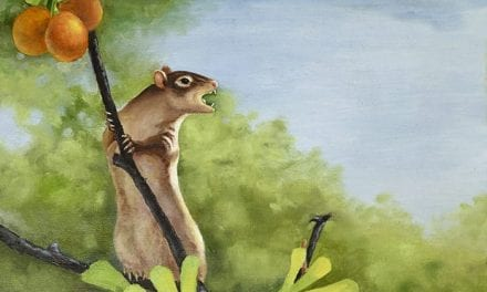 New Cretaceous Mammal Fossil Sheds Light on Evolution of Middle Ear