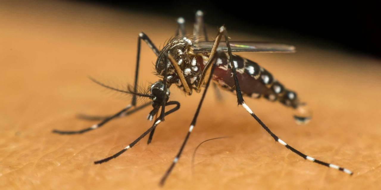 Malaria Drug Could Help Prevent Form of Hereditary Hearing Loss