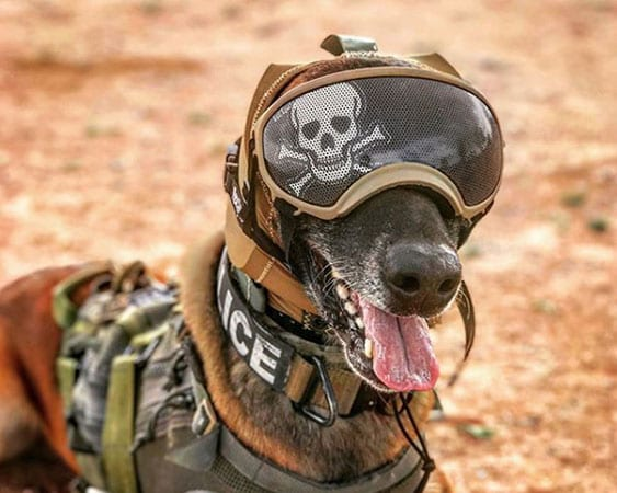 Zeteo Tech Develops Hearing Protection for Military Dogs