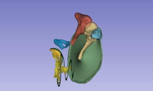 Researchers Map Blood Vessels of Inner Ear