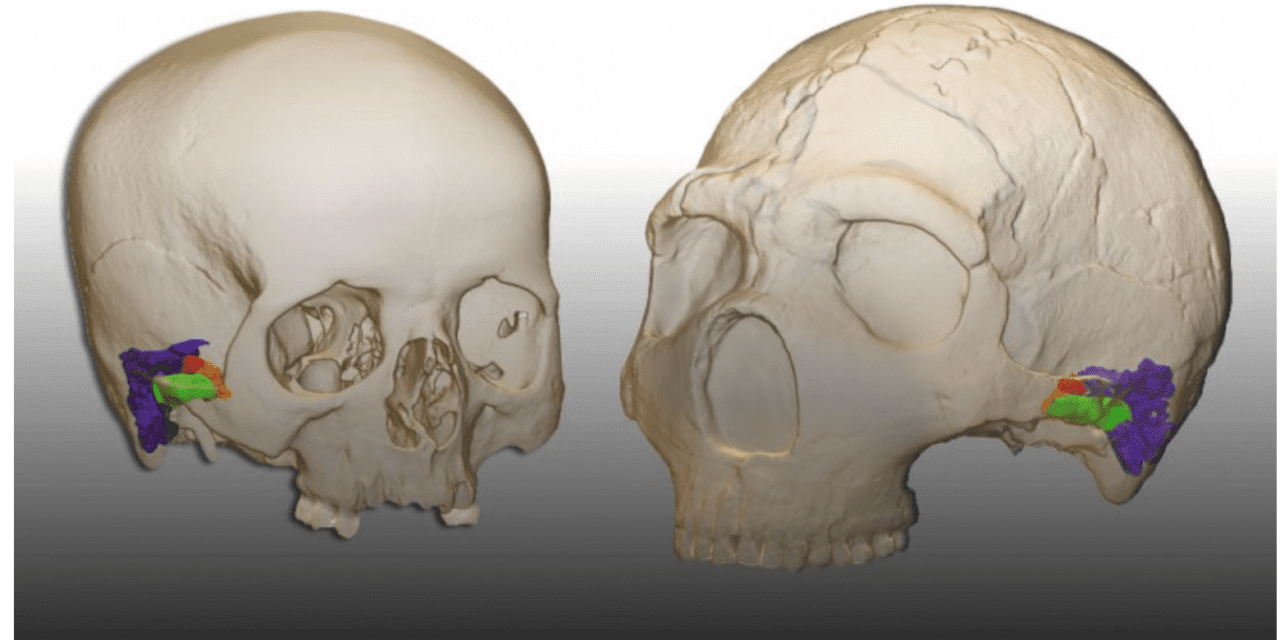 Neanderthals Could Perceive and Produce Speech