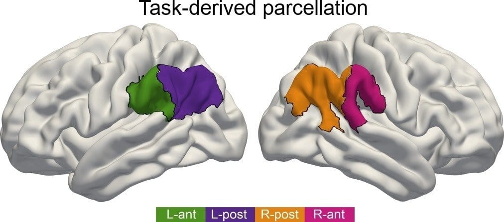 Brain Areas Work Together During Language Tasks