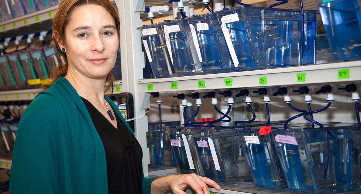 WSU Researchers to Build Ototoxic Drug Database