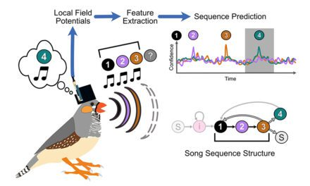 Bird Vocalizations May Help Vocal Prostheses
