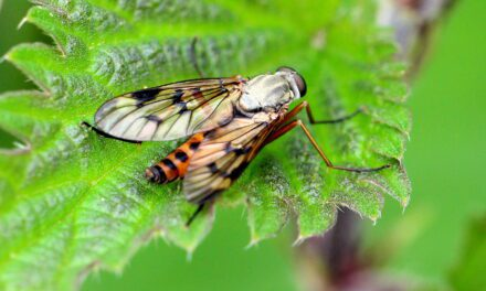 Translating Insect Defense Signals into Sound